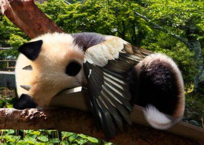 Chimère réalisée par Tiffaine