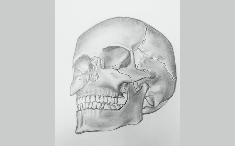 Exercice de Dessin 1ere Année : Anatomie