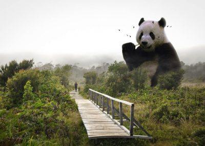 Panda_Geant_Louis_Bonet