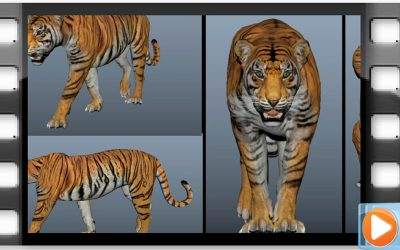 Animateur 3D : Exercice sur les quadrupèdes – 4eme Année